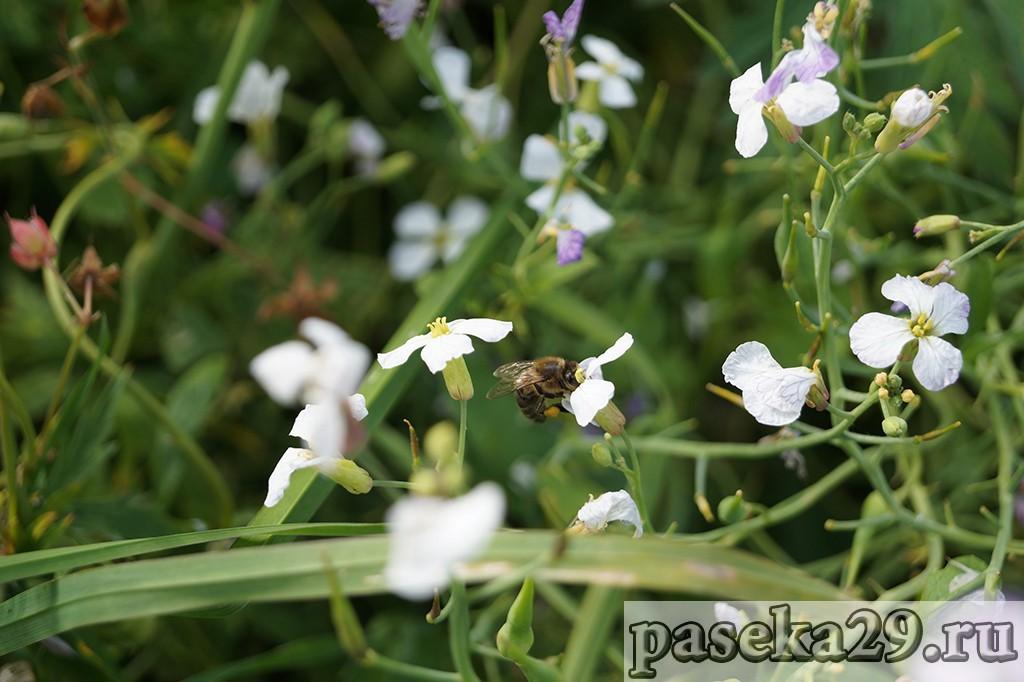 Мой путь в пчеловодство