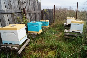 ульи Bee Box