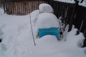 ульи Bee Box при зимовке на улице