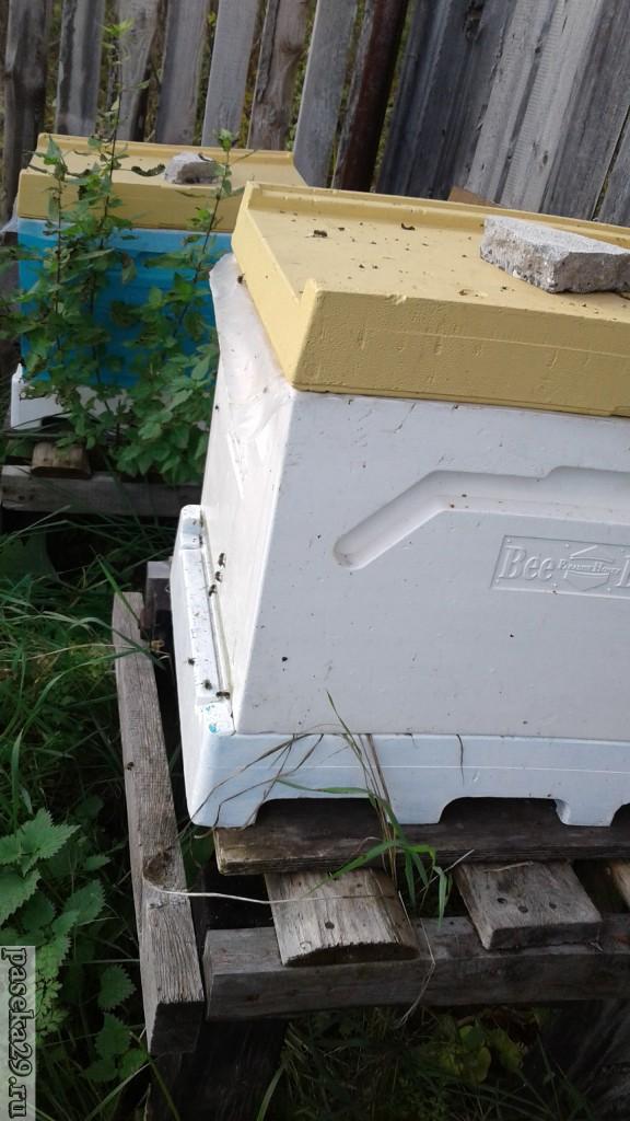 Поздний облёт пчёл