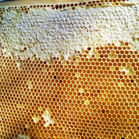 Бактерицидные свойства мёда