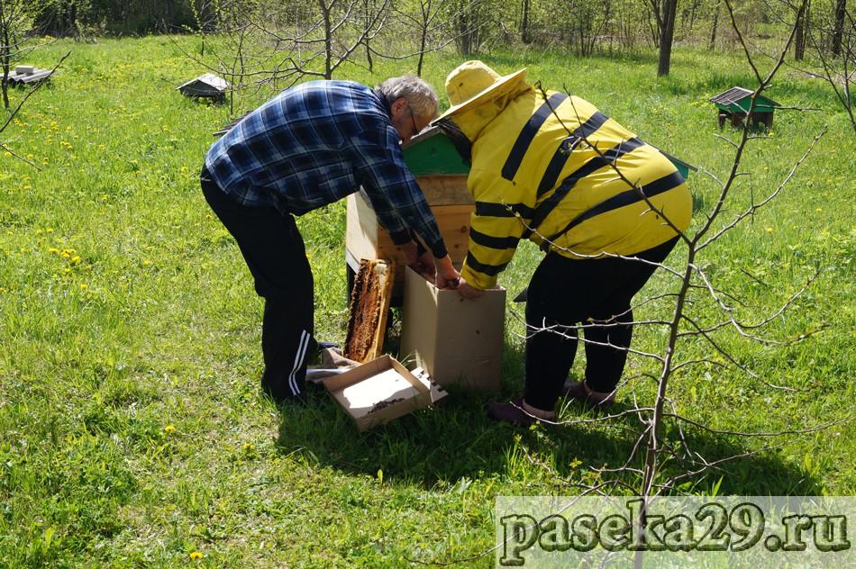 Сергей и Галина собирают первый пчелопакет