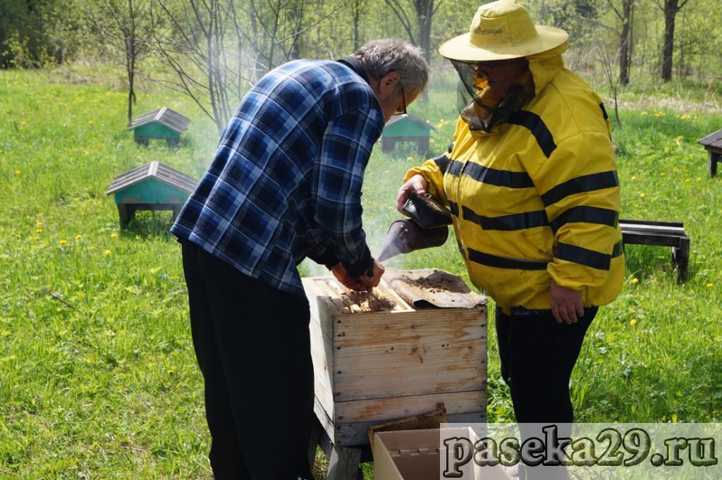 Галина успокаивает пчёл дымом