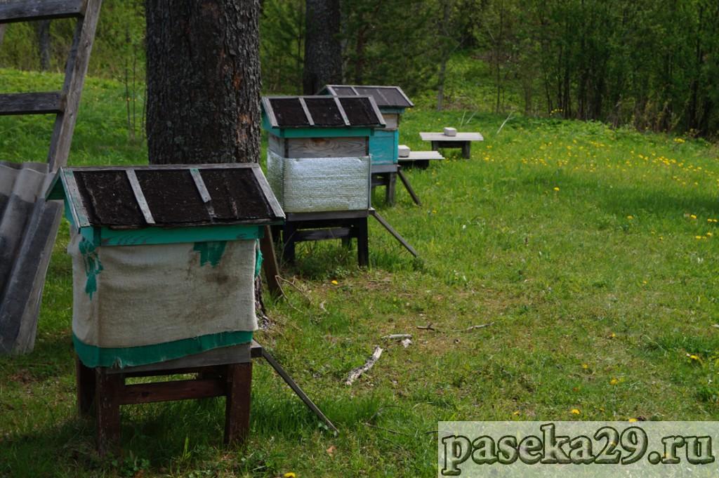 Поездка за пчёлами 2017