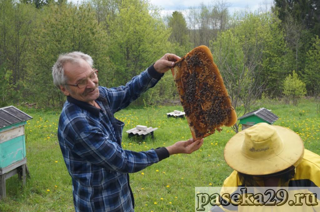 Вот так пчёлы достроили 145мм рамку!