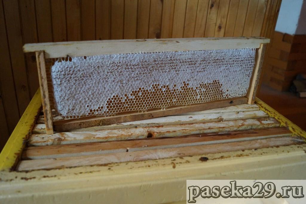 Северный мёд урожая 2017 года