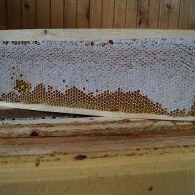 купить сотовый мёд