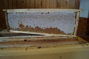 Северный мёд 2017