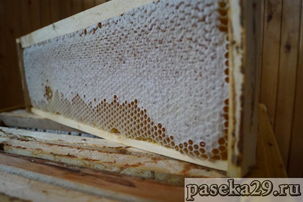 Рамка с мёдом