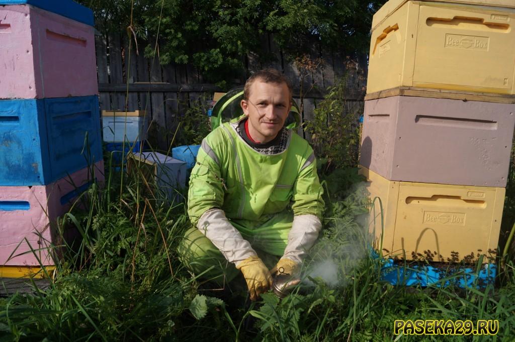 Как прошёл пчеловодный сезон 2019