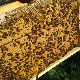 Пчеловодный сезон 2020. Часть I